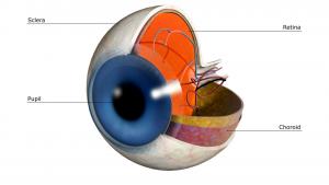 elmiron damages retina